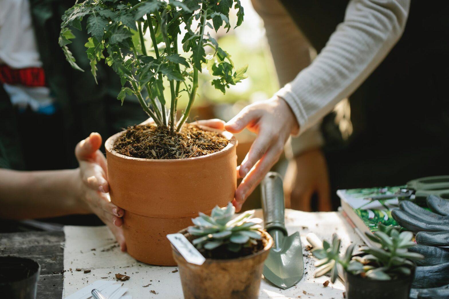 organic seeds for gardening
